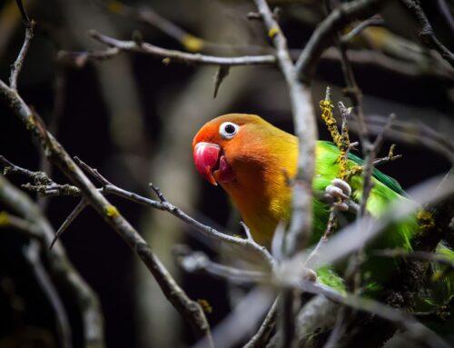 Papagoiga õuemineku meelespea