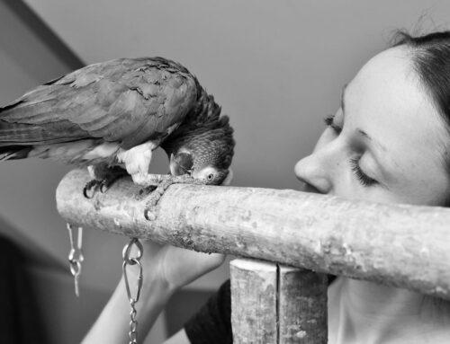 Papagoidel esinevad suleprobleemid