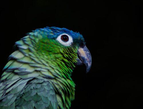 Papagoid ja suitsetamise mürgitav mõju