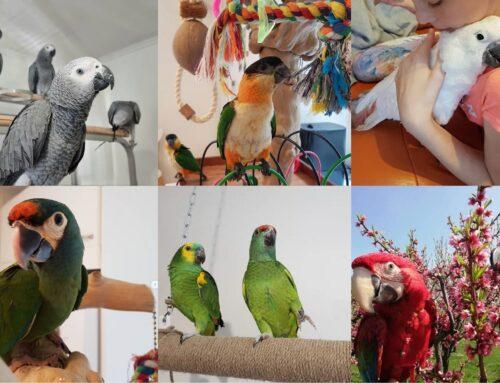 Kust leida kodulemmikuks papagoi? Meil on vastus olemas!